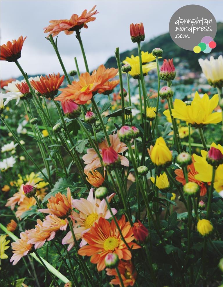Baguio flowers