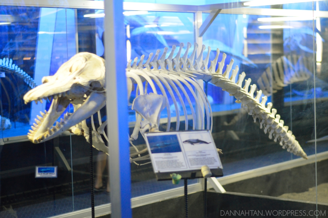D'Bone Collector Museum
